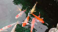 Colored fish in Taiwan Folk Art Museum in Beitou Stock Footage