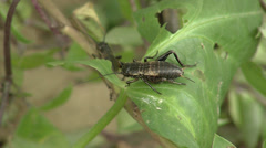 Crickets in the wildlife - stock footage