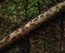 Ants walking by trunk Stock Footage
