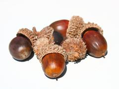 Autumn browns acorns Stock Photos