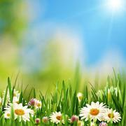 beauty daisy flowers on the summer meadow, abstract natural backgrounds - stock photo
