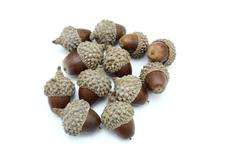 three acorns on a white. - stock photo