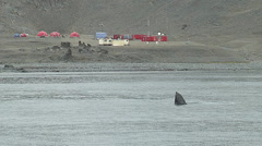 View of Juan Carlos I Station and whale from a boat Stock Footage