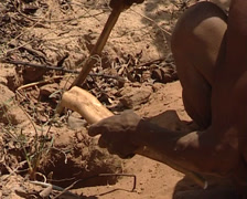 Bushmen looking for roots in the Kalahari Desert Stock Footage