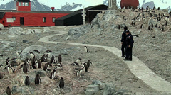 Scientific from Presidente Videla station walking through penguins colony Stock Footage