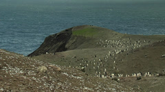 Chinstrap penguins colony Stock Footage