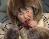Stock Video Footage of Nenet eating a raw reindeer