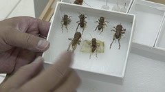 Insect taxidermy Stock Footage