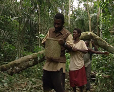Pygmies singing Stock Footage