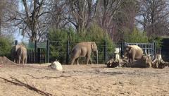 Dublin Zoo Stock Footage