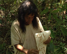 Lacandon men making bark paper of the amate tree.Traditional Mayan techniques. Stock Footage
