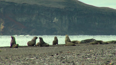 A group of sea lions in the coast Stock Footage