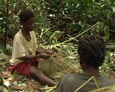 Pygmies making basket Stock Footage