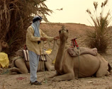 Stock Video Footage of Berber man lead a caravan of dromedaries
