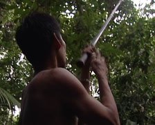 Punan shoot his blowgun Stock Footage