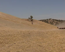 Pure Spanish Horse running in the field Stock Footage