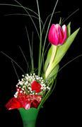 tulips on black background - stock photo