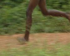Pygmiess settlement Stock Footage