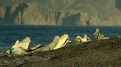 Whale skeleton in the Hektor whaling station, Antarctica Stock Footage