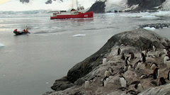 Scientific boat anchored in middle of the antarctic and penguins Stock Footage