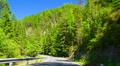 POV, driving through alpine forest. HD Footage