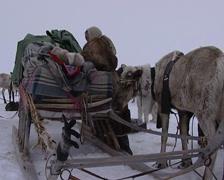 Dismantling the Nenet settlement Stock Footage
