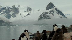 Penguin Adelie colony with snowy mountains at the bacground Stock Footage