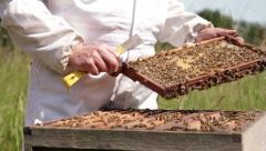Beekeeper checking beehives for honey in the English countryside in summer. HD Stock Footage