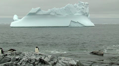 Seal and penguin resting on the rocks with an iceberg on the background Stock Footage