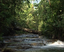 Lacandon walk through the jungle of Palenque in search of food. Stock Footage