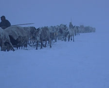 Nenets moving his camp to another place. Traveling in queue through the snow Stock Footage