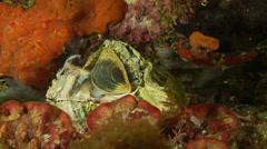 Underwater footage sea shell corsica corse mediterranean - stock footage