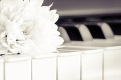 Close-up of piano keyboard and flower in monochrome look Stock Photos