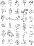 Fresh herbs Stock Illustration