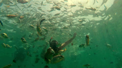 Man feeding fish. Underwater scene. Stock Footage