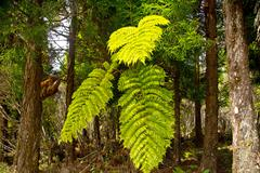 Tree fern in the forest - stock photo