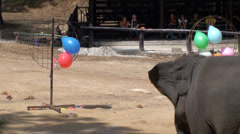 Elephants drawing and playing football during a show Stock Footage