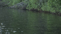 Caddis hatch, Newfoundland Stock Footage