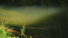 Brown trout in sunbeam - stock footage