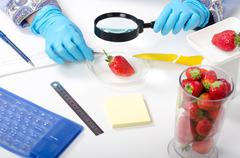 phytosanitary expert hands inspecting the appearance of strawberries - stock photo