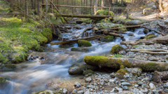 Deep in the forest, time lapse, forest scene at small creek in the spring Stock Footage