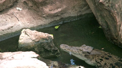 A crocodile in the rocks assesses prey Stock Footage