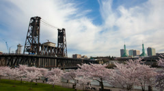 Flowering Cherry Blossom Trees Spring in Portland Oregon 1080p Stock Footage