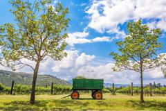 Green wagon and vineyard Stock Photos