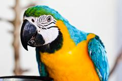 Colorful blue parrot macaw Stock Photos