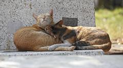cute cat good dream - stock photo