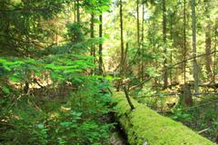 Stock Photo of Landscape.
