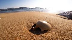 Human skull on sand beach Stock Footage