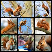 Mosaic red squirrel - stock illustration