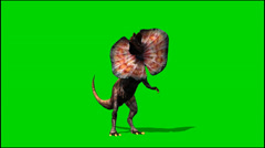 dinosaurs dilophosaurus looks around - green screen - stock footage